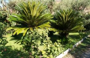 Giardino del Villino degli Aranci