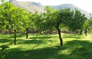 Giardino alberato del Villino degli Aranci